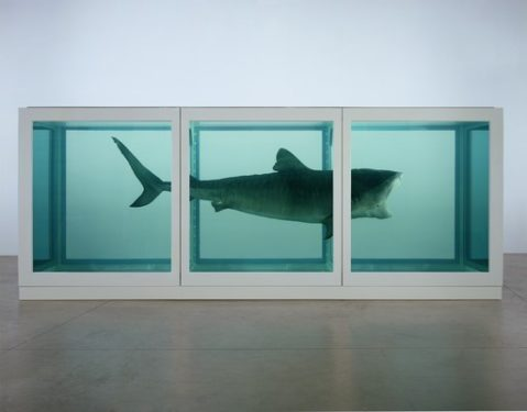 """Damien Hirst, """"The Physical Impossibility of Death in the Mind of Someone Living"""", Tate Modern, London"""