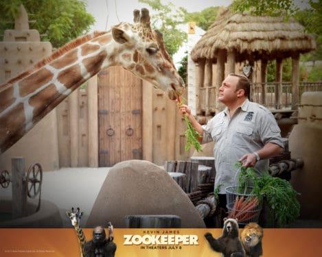 """Memoria procedurala in filmul """"Omu de la Zoo"""""""