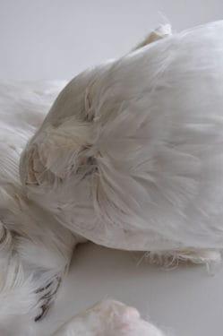 Între Baby Jesus şi Feather Child: Corpul la Lucy Glendinning