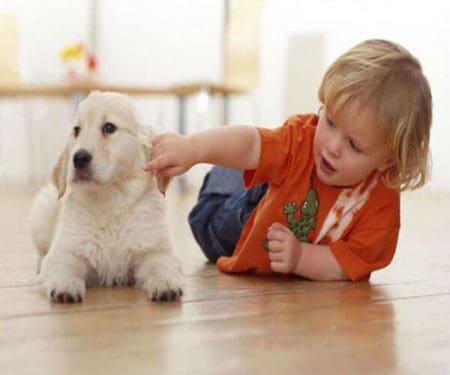 anxietatea copiilor caini de companie