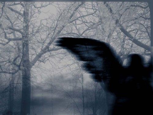 Şi eu zburam deasupra aripilor ei negre
