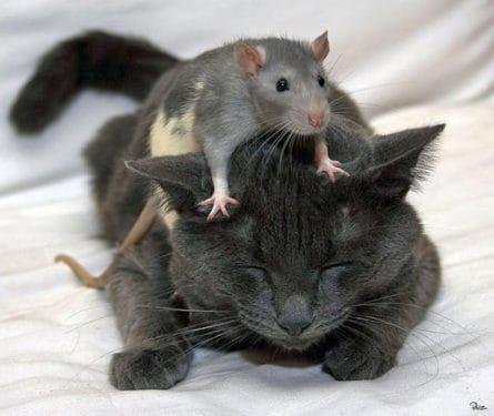 Şoarecii lui Tavares