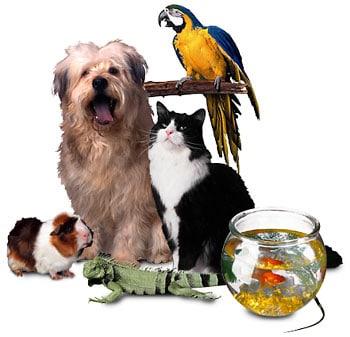 """Barrie Gunter, """"Stapanul si animalul de casa. Beneficiile relaţiilor cu animalele"""", Editura Trei, 2011"""
