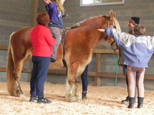 De pe canapea, pe cal. Psihoterapia cu cai, pentru prima dată în România