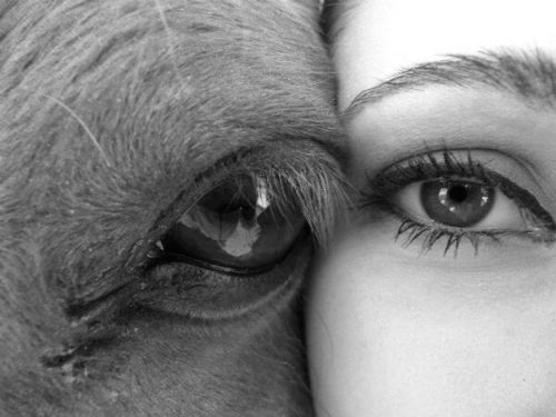 terapie cai echitatie